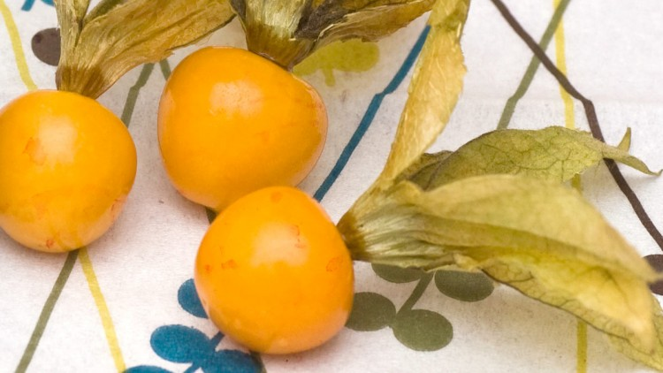 Physalis Dipped in Chocolate