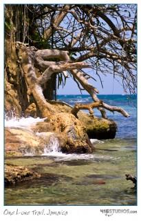 one-love-trail-jamaica-2