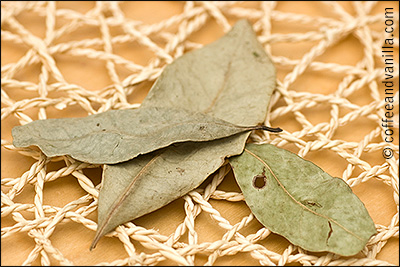dried pimento allspice leaves for jerk chicken