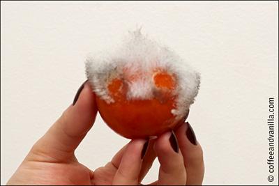 moulded tomato mould rotten tomato