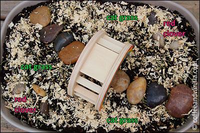 hamster garden tutorial