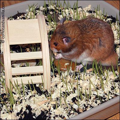 hamster grass and flower garden
