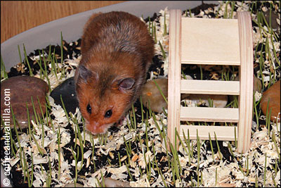 grass and flowers for hamster