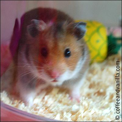 peanut free hamster healthy diet