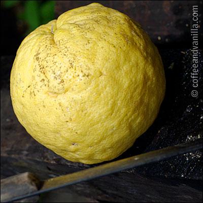 exotic citrus fruits benefits
