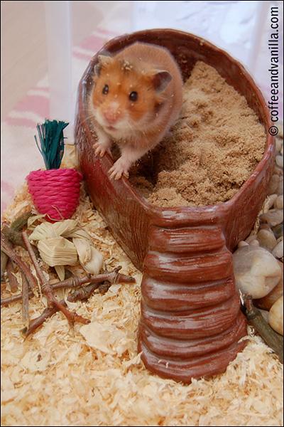 DIY sand bath for the hamster
