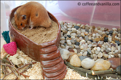 hamster playground in a box