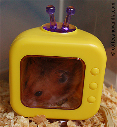 hamster inside the TV