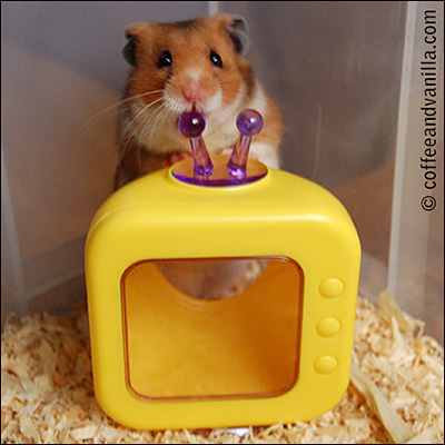 hamster television toy