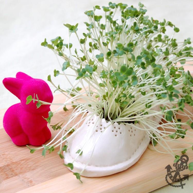 DIY cress planter