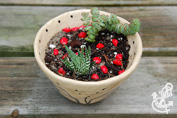 how to make succulents garden