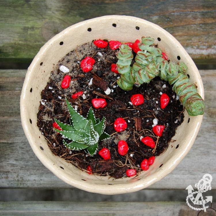 clay planter pot for succulents