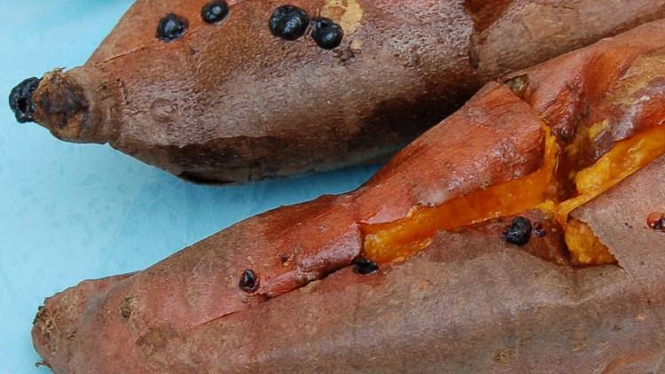 Kids' Favourites – Simple Roasted Sweet Potatoes
