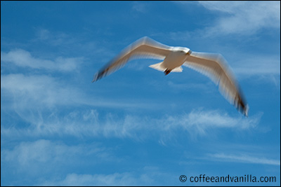 seagull capturing motion