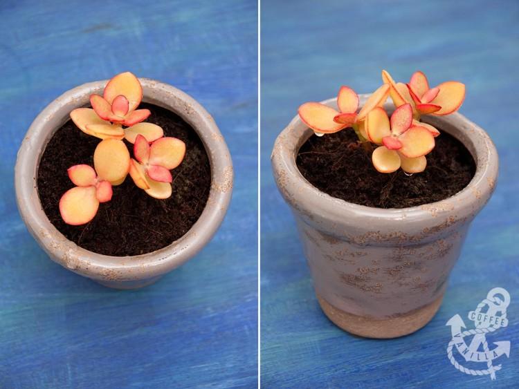 HomeSense TKMaxx flower pots planters flowerpots