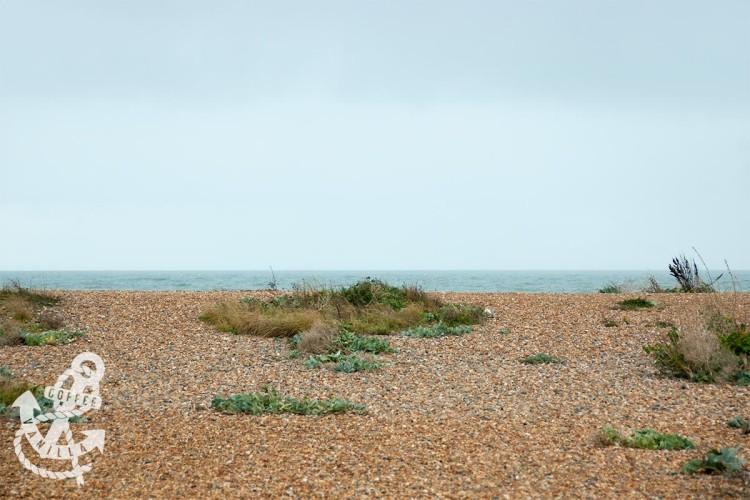 shoreham beach flora