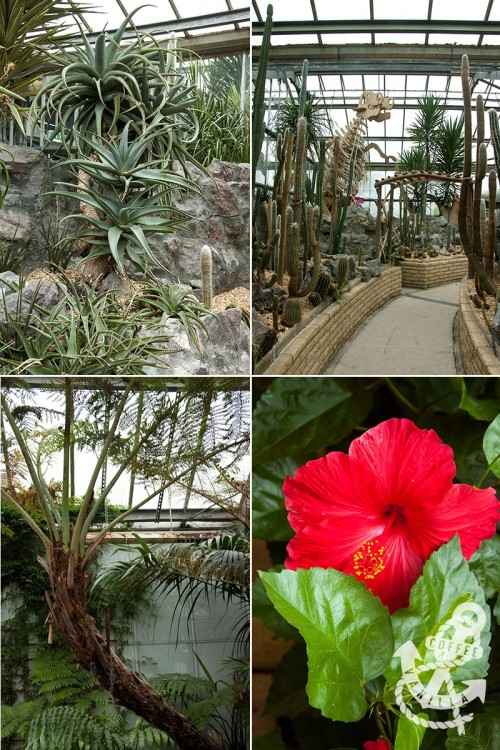 tropical subtropical plants