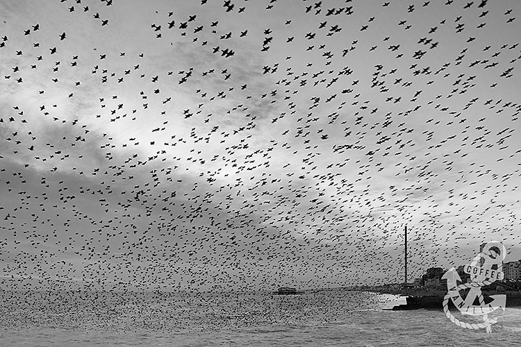 starlings taken with Nikon D7100
