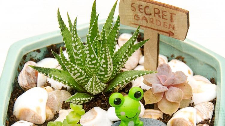 Miniature Fairy Gardens with Succulents – DIY Gift Idea