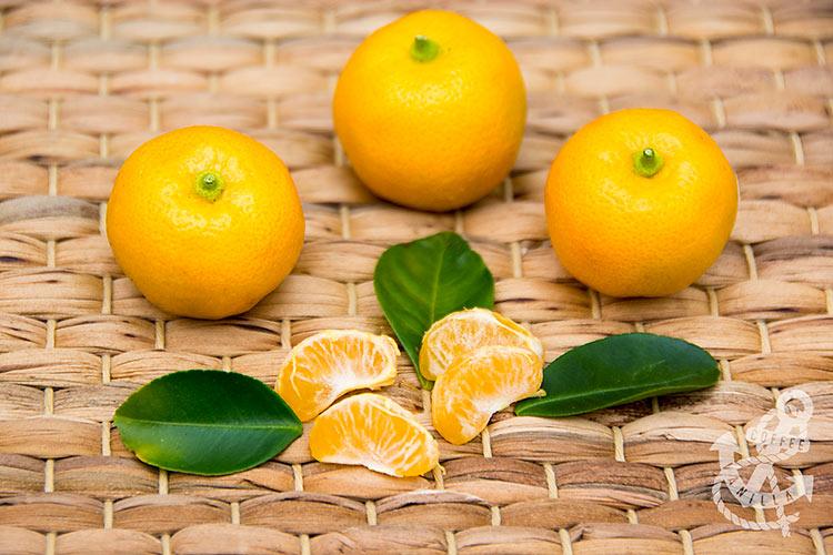 acid orange sour orange recipes