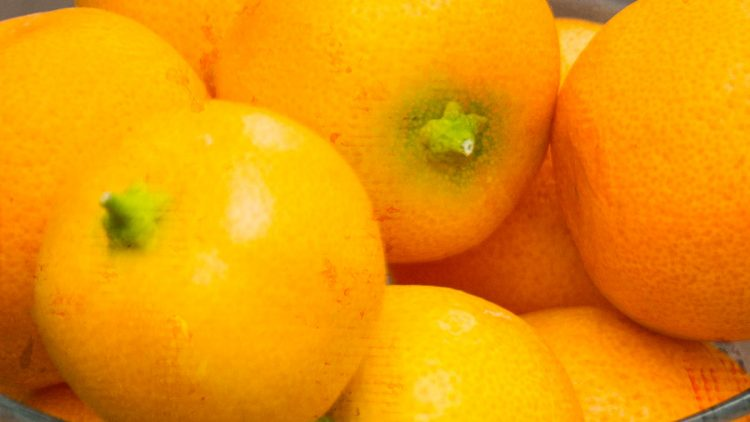 Homemade Calamondin Marmalade